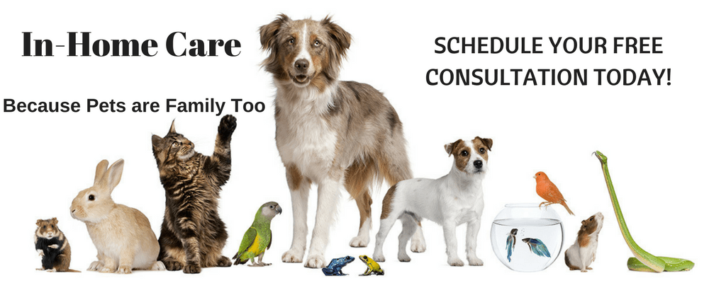 All About Dogs In-Home Care