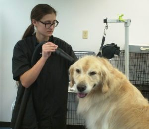 All About Dogs Groomer Julianna