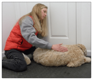 All About Dogs - Canine Massage