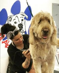All About Dogs Professional Groomer Nina