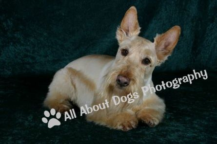 All About Dogs Professional Pet Photography