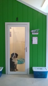 All About Dogs, Dog Boarding, Occupied Kennel Room