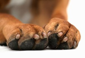 All About Dogs Grooming - Nail Care