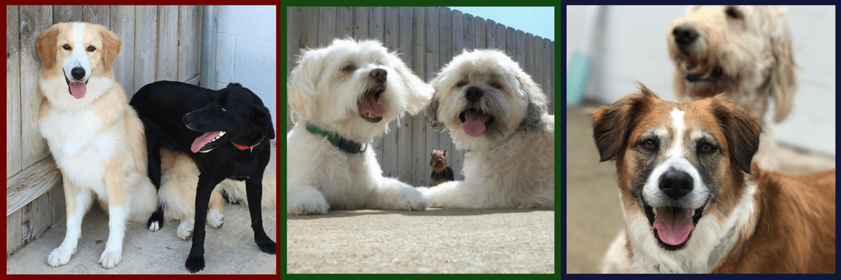 All About DogsDaycare Header