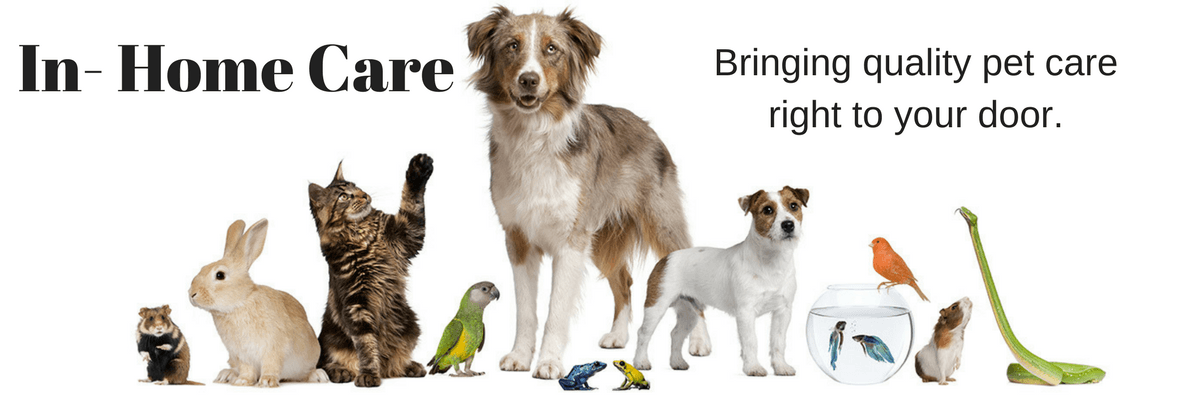 All About Dogs In-Home Pet Care
