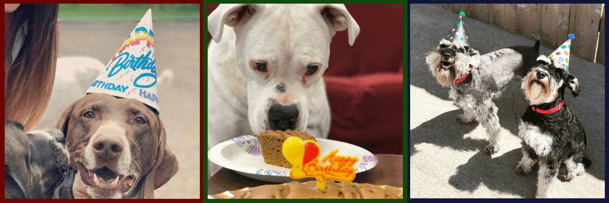 All About Dogs Daycare Birthday Packages