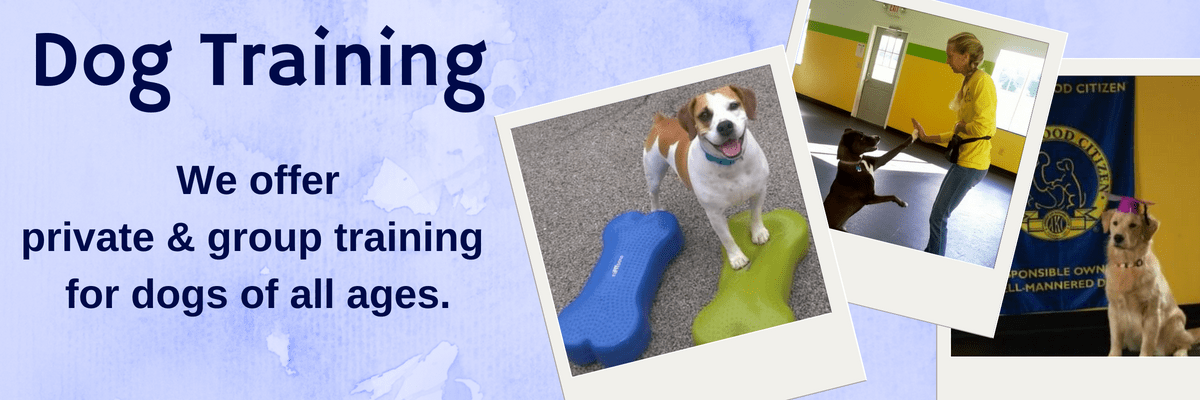 All About Dogs Training