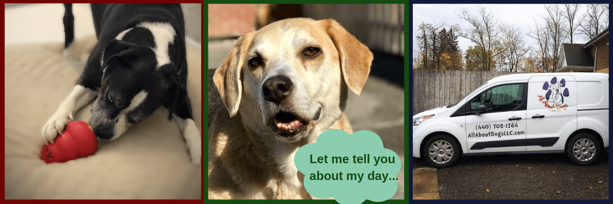 All About Dogs Boarding Add-On Services