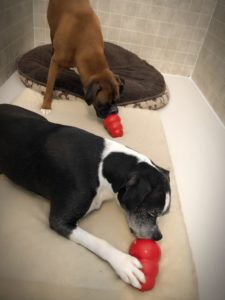 All About Dogs Tana's Tasty Kong Treats