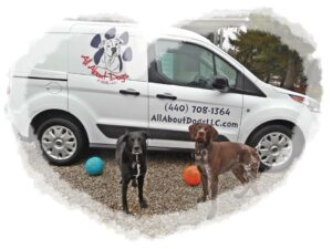 All About Dogs Taxi Service