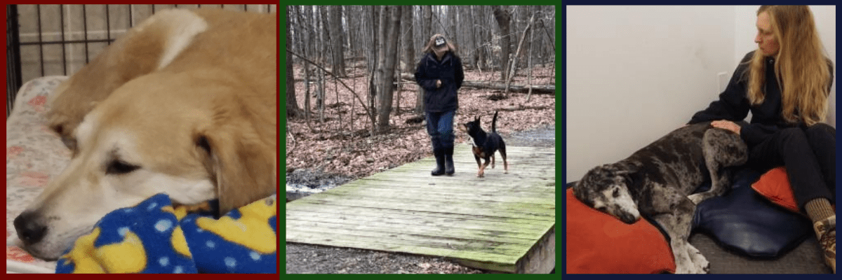 All About Dogs Wellness Services