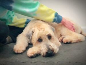 All About Dogs Massage & Reiki