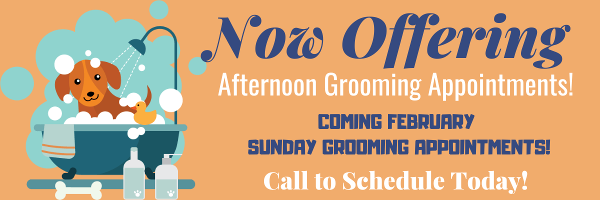 All About Dogs New Grooming Appointments