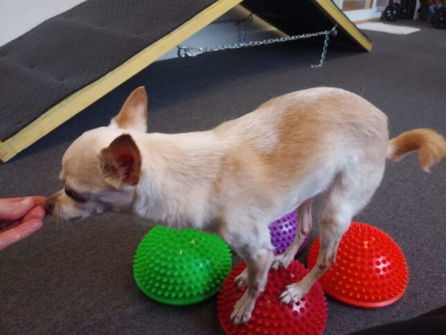 All About Dogs Enrichment Training