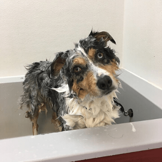 All About Dogs self-Serve Dog Wash