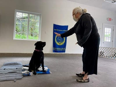All About Dogs Group Training